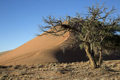 Panorama in Namibia Royalty Free Stock Photo