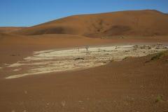 Panorama in Namibia Stock Photos