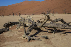 Panorama in Namibia Royalty Free Stock Images