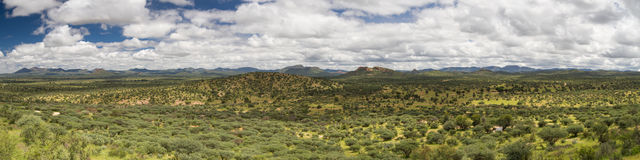 Panorama of the namibian grassland in the rain season. Namibia, Africa Royalty Free Stock Photography