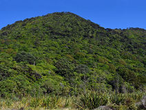 Panorama nativo espectacular y no degradado de Bush en la isla de Kapiti Foto de archivo libre de regalías