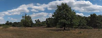 Panorama Nature conservation area Schwanheimer dune in Frankfurt am Main, Hesse, Germany.  stock photography