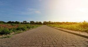 Panorama of the nature and environment, Pathway in the beautiful green nature. Countryside landscape , Sunshine effect Stock Photos