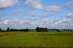 Panorama in Netherlands Stock Photos