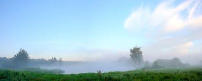 Panorama nevoento do verão bonito das árvores que crescem no banco do rio imagens de stock royalty free