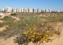 Panorama of the new district of the city of Holon in Israel. View from the sand dunes.  stock photography