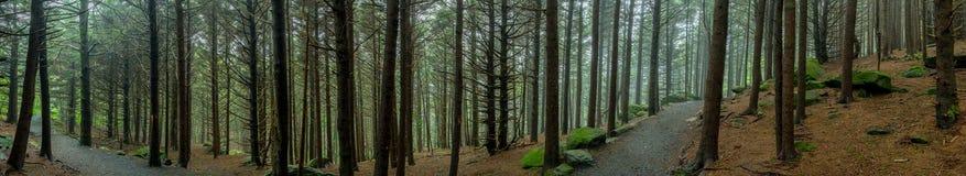 Panorama Niesamowity Lasowy ślad obraz royalty free