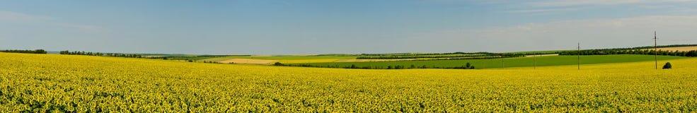Panorama no campo Fotos de Stock Royalty Free