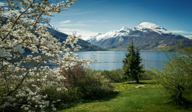 Panorama of Nordfjord in springtime. Norway Stock Photography