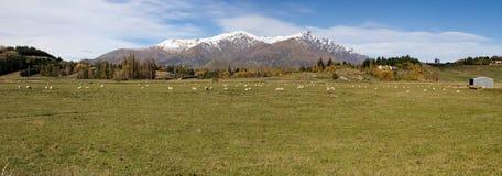Panorama Nueva Zelandia Fotografía de archivo