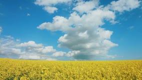 PANORAMA: O amarelo viola flores e o céu azul com filme
