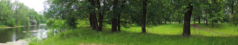 Panorama of oak forest and river Royalty Free Stock Photo