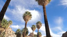Panorama Od dna W górę oazy Z drzewkami palmowymi W pustyni swobodny ruch 4K zbiory