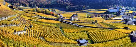 Panorama Of Autumn Vineyards In Switzerland Stock Photos