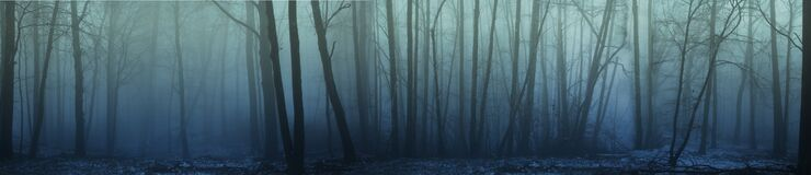 Free Panorama Of Forest Fog In The Winter Forest, Mysterious Mystical Landscape Of Greenish Color Royalty Free Stock Photo - 170571815