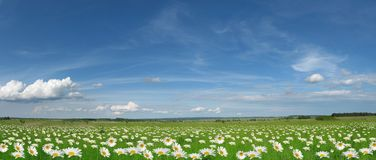 Panorama Of  Meadow Stock Photos