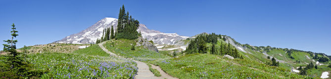 Panorama Of Mount Rainier And Its Summer Meadows Royalty Free Stock Photography