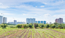 Panorama Of Urban Garden Royalty Free Stock Photography