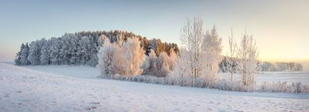 Free Panorama Of Winter Nature Landscape. Panoramic View On Frosty Trees On Snowy Meadow In Morning With Warm Yellow Sunlight Royalty Free Stock Photography - 125734897