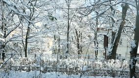 Panorama of old yard covered with snow. Panorama of old yard with trees covered with white fluffy snow against cloudy blue sky stock video
