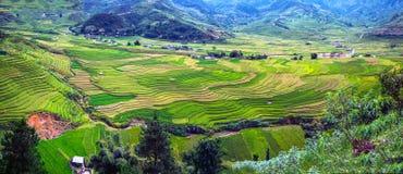 Panorama a opinião terraced do campo do arroz, a Turquia Le, Vietname Fotos de Stock Royalty Free
