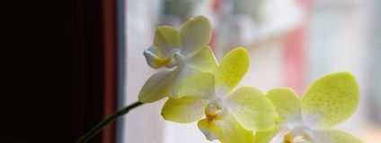 Panorama of orchid Stock Images