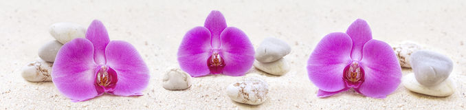 Panorama with orchids and zen stones. In the sand Stock Photos
