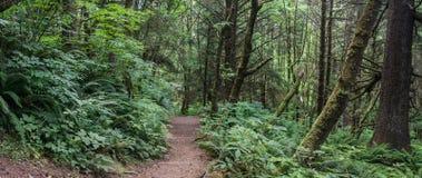 Panorama Oregon tropikalnego lasu deszczowego drewna obrazy royalty free