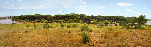 Panorama orientale di alta risoluzione del parco nazionale di Tsavo immagini stock libere da diritti