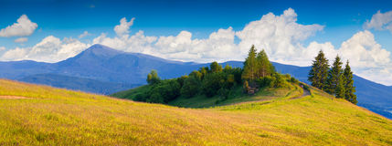 Panorama ot the summer sunny morning Royalty Free Stock Image