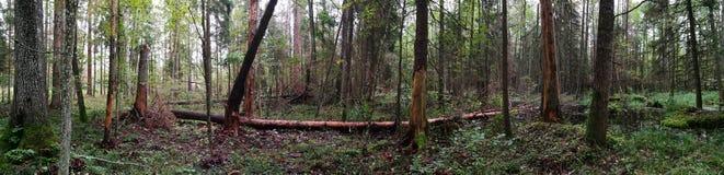 Panorama otoñal del soporte natural Imagenes de archivo