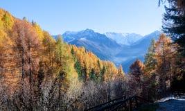 Panorama outonal com folhas e as montanhas coloridas Fotografia de Stock Royalty Free