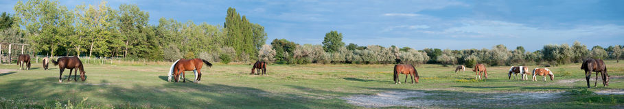 Panorama of a Paddock Stock Photography
