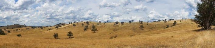 Panorama padok z żółtą trawą krajobrazowy malowniczy wiejski obraz stock