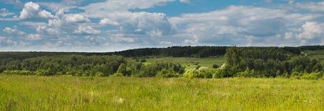 Panorama, paesaggio russo, campo e foresta Fotografia Stock Libera da Diritti