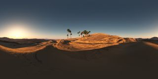 Panorama of palms in desert at sunset. made with the one 360 deg Stock Photo