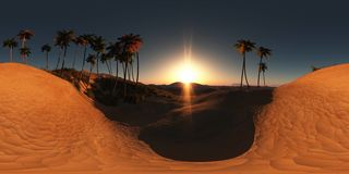 Panorama of palms in desert at sunset. Made with the one 360 degree lense camera without any seams. ready for virtual reality Royalty Free Stock Images