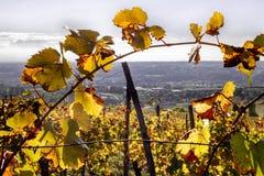 Panorama par une branche de vigne du Monferrato images stock