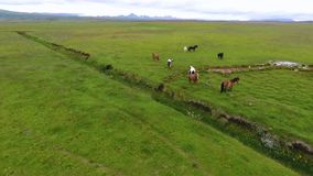 Panorama of pasture with horses in Iceland. Andreev. stock video