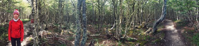 Panorama of patagonian forrest. Forrest panorama view Stock Photography