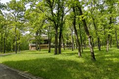 Panorama of a path through a lush green summer forest Royalty Free Stock Images