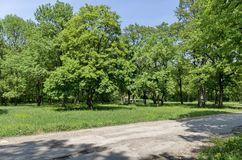 Panorama of a path through a lush green summer forest Stock Photography
