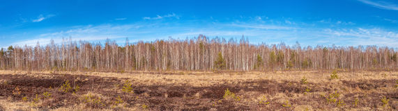 Panorama of the peat bog. Stock Photo