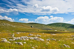 Panorama of Pester plateau landscape Stock Image