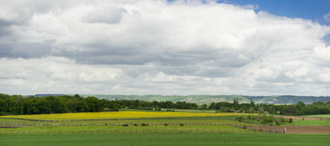Panorama photo of meadow Stock Photos