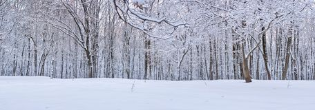 Photo of Winter Day in Forest, Abstract Background, Concept of Peace and Harmony in Countryside royalty free stock images