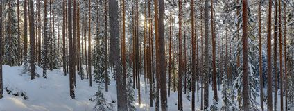 Panorama photo of winter landscape in Hedmark county. Panorama photo of winter landscape in Hedmark. Panoramic winter scene in january. Snowy winter landscape royalty free stock photos