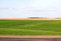 Panorama pi?kna wie? Belarus sunny popo?udnia cudowny wiosna krajobraz Zielony pole z wzgórzami wiejski obrazy stock