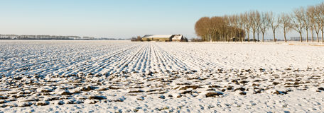 Panorama picture of a plowed field covered with snow Royalty Free Stock Image