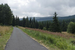Panorama of picturesque forest with road and glade, Vitosha mountain Stock Images